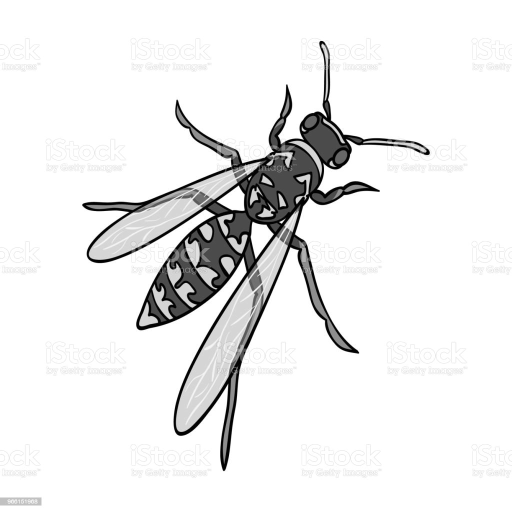 Wasp, hymenopteran insect.Wasp, stinging insect single icon in monochrome style vector symbol stock isometric illustration web. - Royalty-free Animal arte vetorial