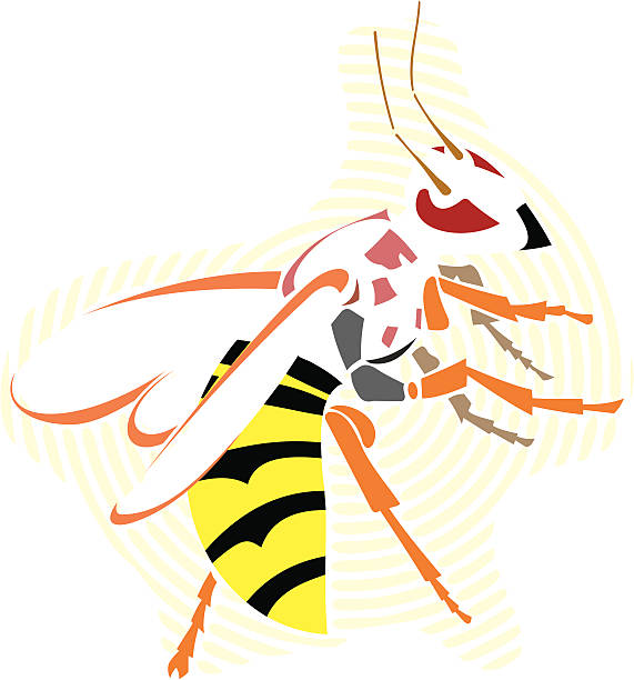 Wasp vector art illustration