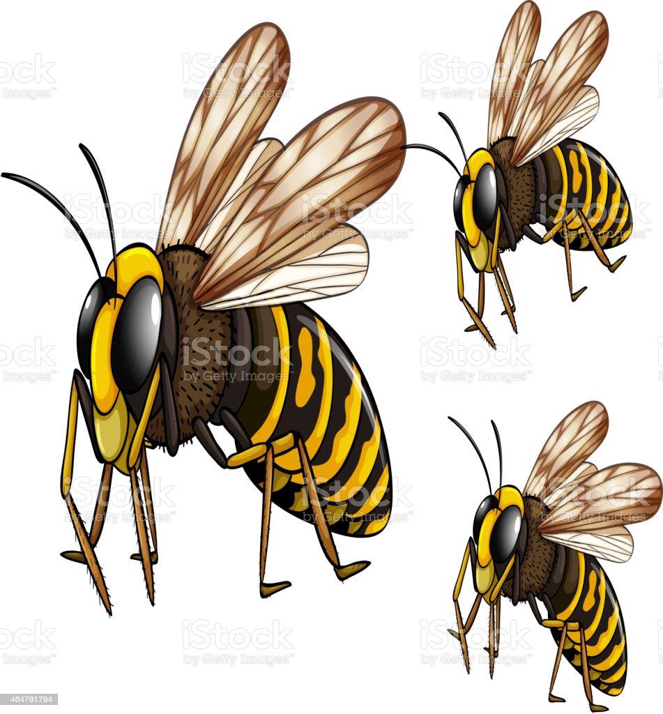 Wasps vector art illustration