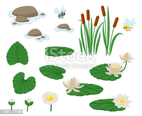 Cute, croaking, in love, laughing, frightened, hungry. Water and Swamp Plants with Waterlily and Reed