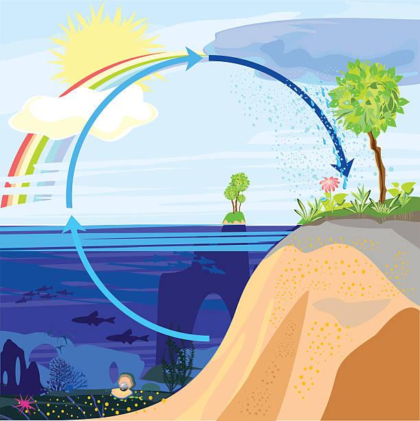 ilustrações de stock, clip art, desenhos animados e ícones de ciclo da água na natureza - alter do chão
