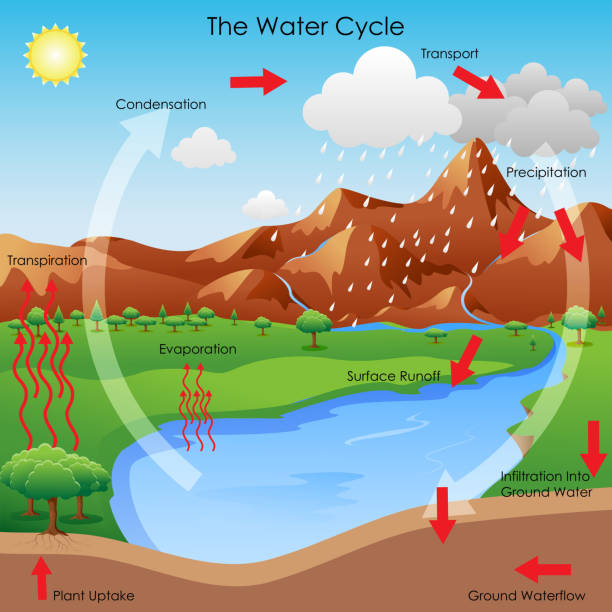 water cycle water cycle clip art vector images illustrations istock