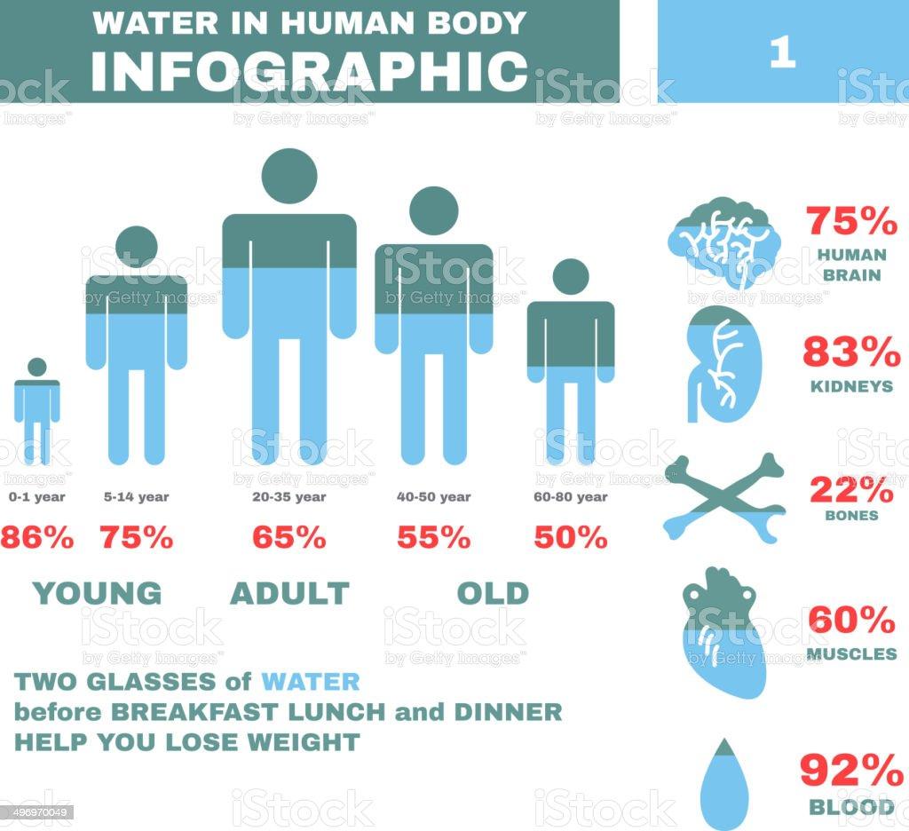 Wasser In Hyman Körper Infografik Vektor Stock Vektor Art und mehr ...