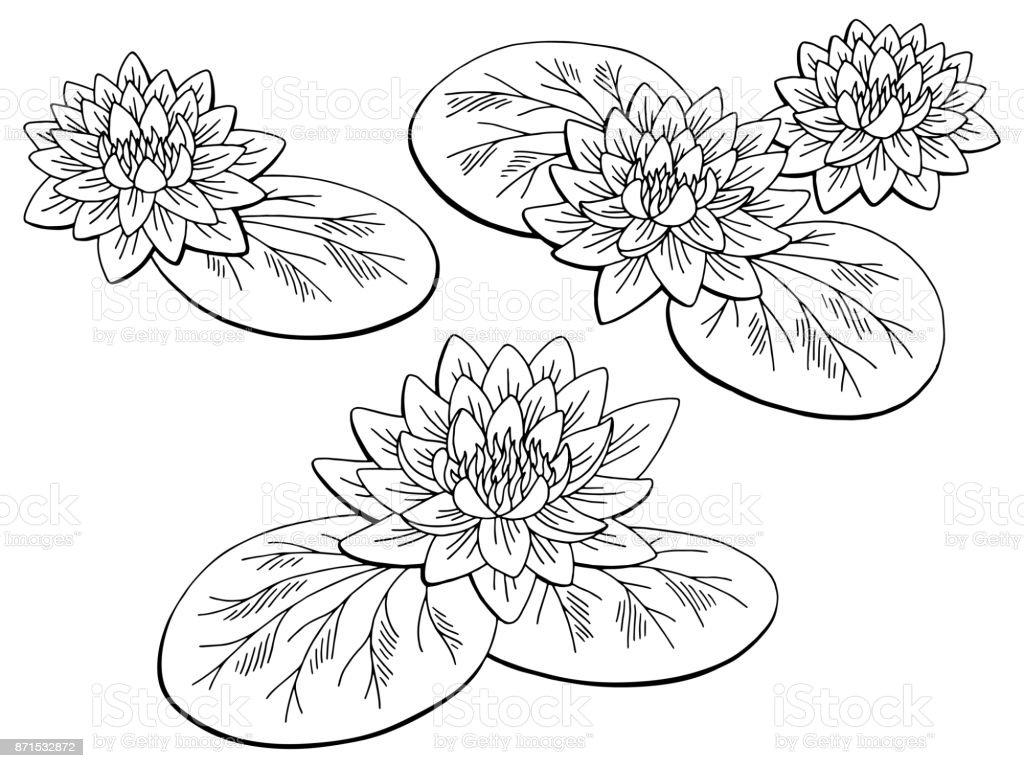 Coloriage Fleur De Nenuphar.Nenuphar Fleur Graphique Noir Blanc Isole Esquisse