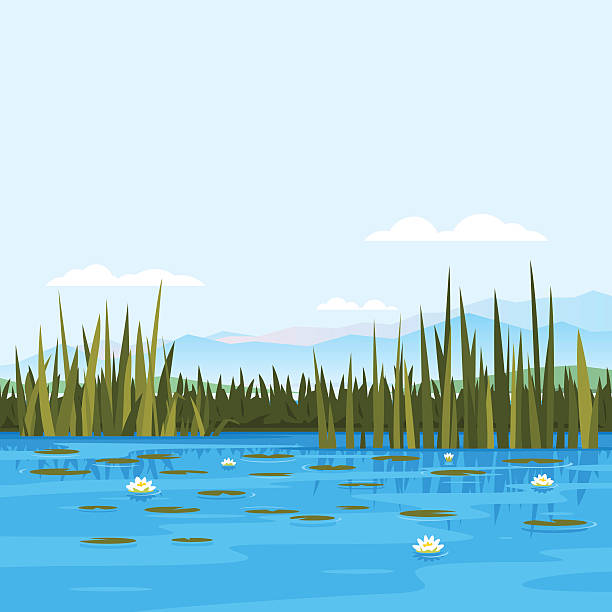 water lily landscape - pond stock illustrations
