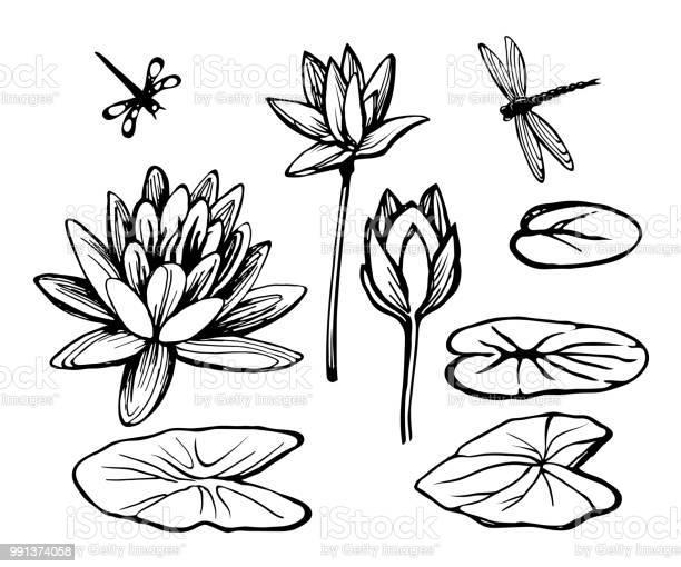 Water lily lotus and dragonfly vector id991374058?b=1&k=6&m=991374058&s=612x612&h=yba gyw37wg0apv6fn1lmjck45hvwv21tvzlrmfspuo=