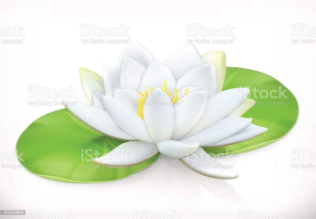 Water lily. Lotus flower. 3d vector icon vector art illustration