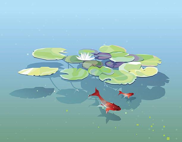 seerose pads floating in den teich mit jeden erdenklichen - seerosenteich stock-grafiken, -clipart, -cartoons und -symbole