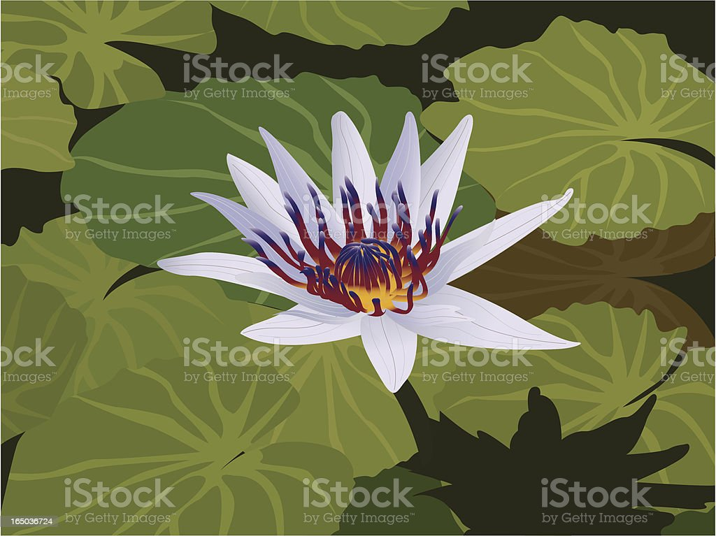 water lily royalty-free water lily stock vector art & more images of dark