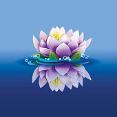 illustration of water lily in a pond
