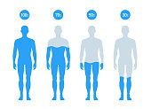 Water Percentage in human body illustration, Chart