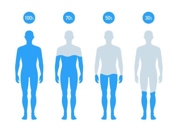bildbanksillustrationer, clip art samt tecknat material och ikoner med vatten procent i människokroppen illustration, diagram - helkroppsbild