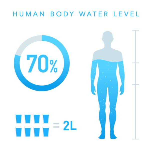illustrazioni stock, clip art, cartoni animati e icone di tendenza di percentuale di acqua dell'illustrazione del corpo umano, grafico - il corpo umano