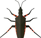 Water scavenger beetle isolated on white background wildlife animal coleoptera