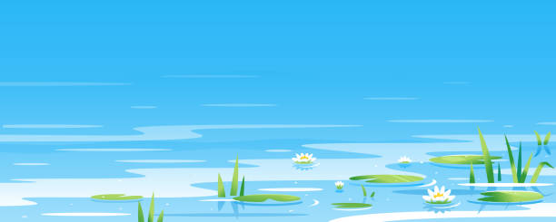 Water surface with water lilies Water surface with water lily and bulrush plants nature landscape illustration, fishing place, pond with blue water with green plants pond stock illustrations
