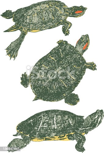 Turtle vector Illustration. Various fill colors are grouped separately.