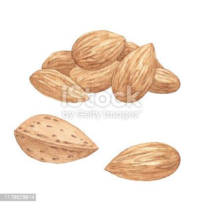 istock Watercolor Almonds 1178529814