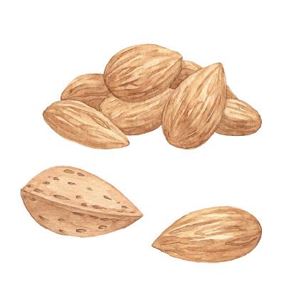 Watercolor Almonds
