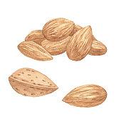 Vector illustration of almonds.