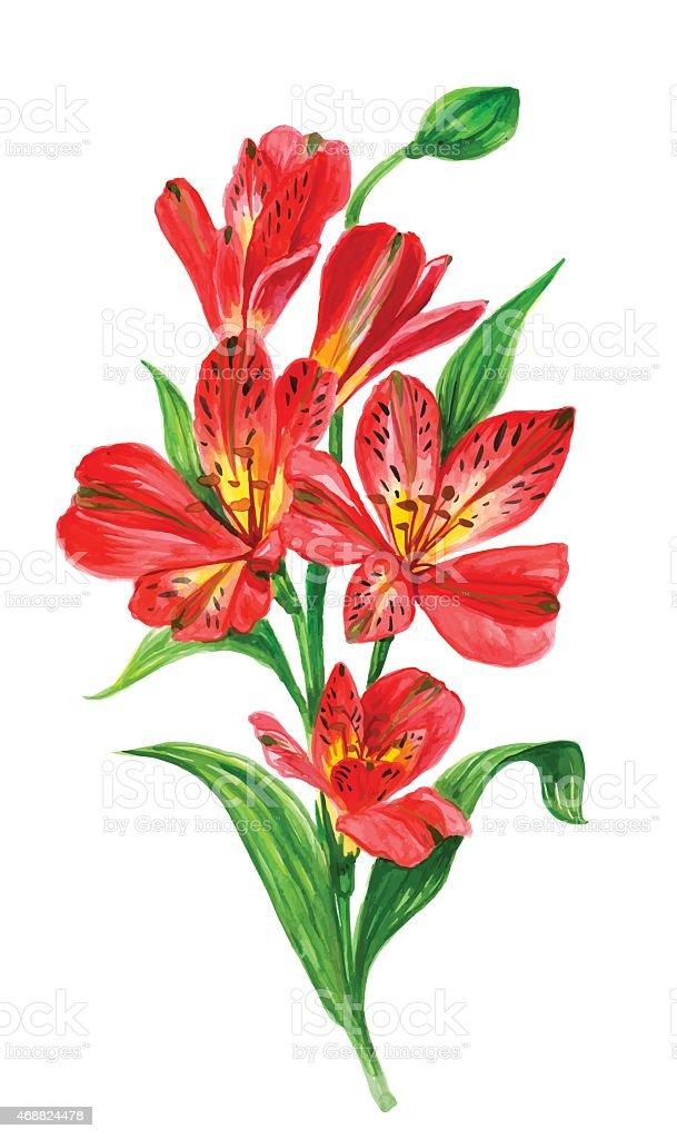 Fondo de flores acuarela alstroemeria - ilustración de arte vectorial