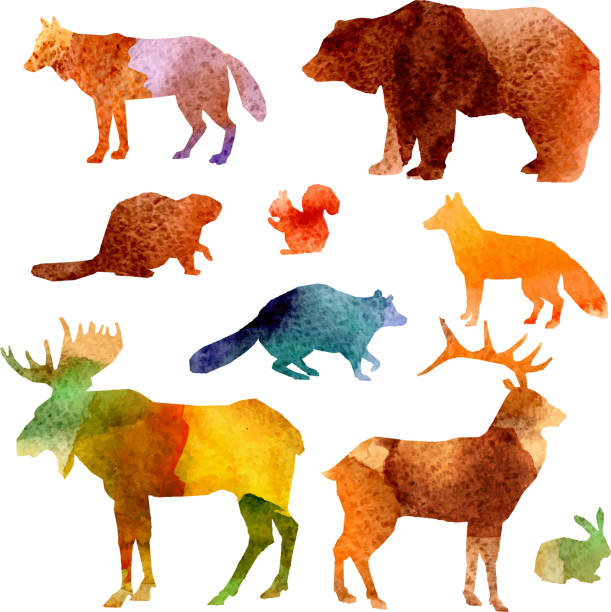 watercolor animals Watercolor forest animals set with beaver raccoon fox and hare isolated vector illustration animal stock illustrations