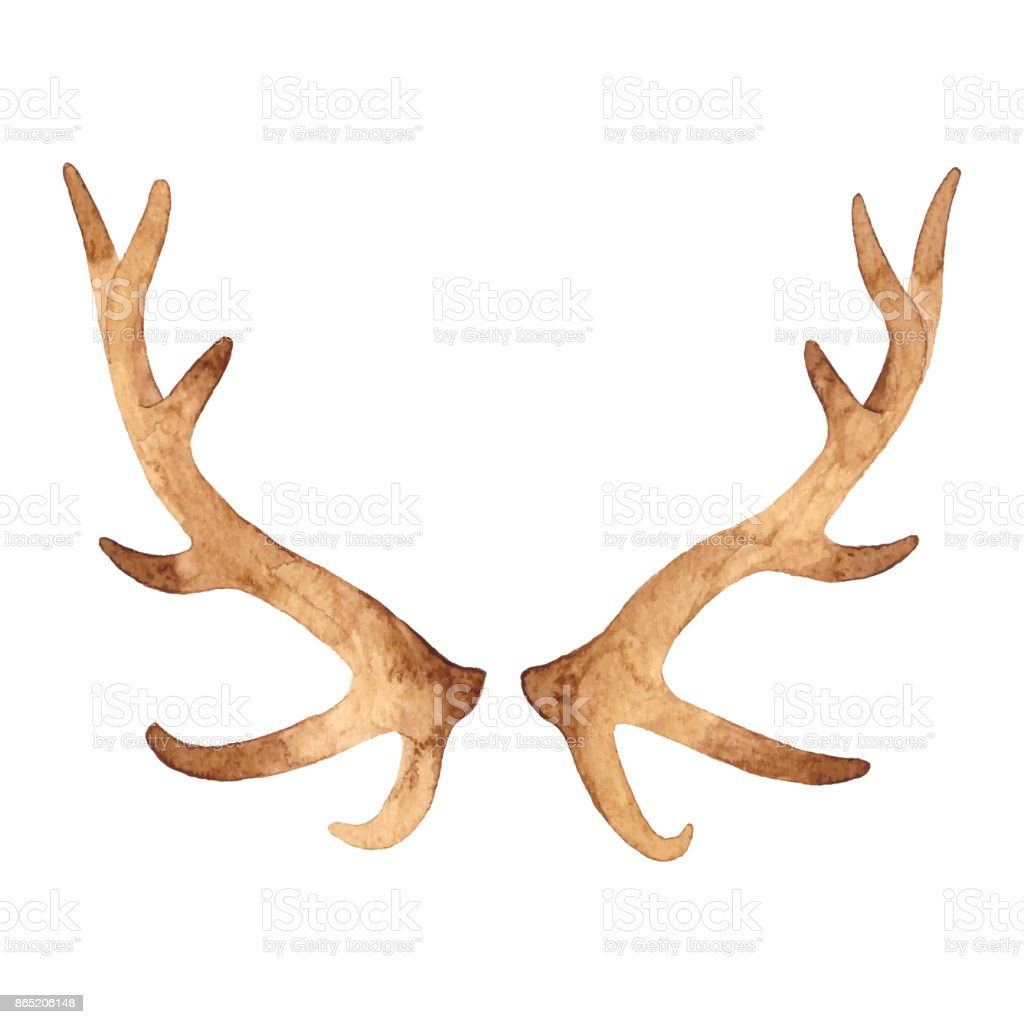 Watercolor Antler vector art illustration