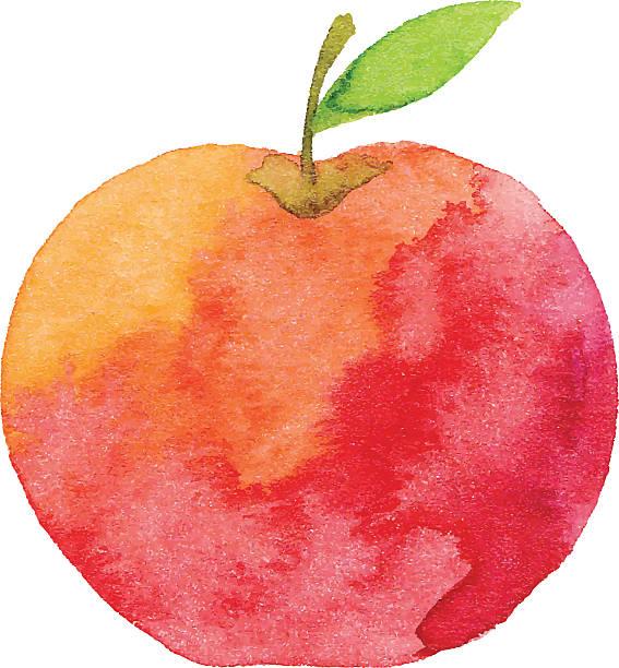 Acuarela de manzana - ilustración de arte vectorial