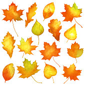 Vector set of watercolor autumn leaves