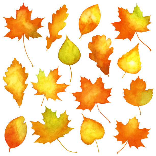 Watercolor autumn leaves Vector set of watercolor autumn leaves fall leaves stock illustrations