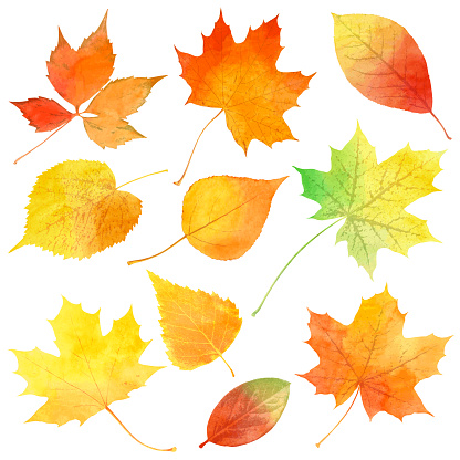 Vector set of watercolor autumn leaves. EPS 10 file contains transparencies.