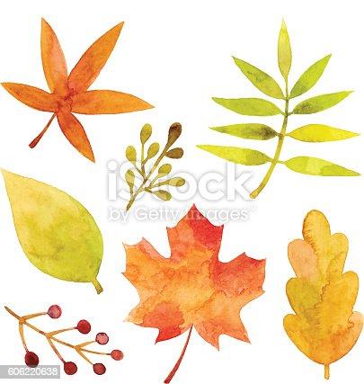 Vector illustration of leaves.