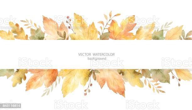 Watercolor autumn vector banner of leaves and branches isolated on vector id843118814?b=1&k=6&m=843118814&s=612x612&h=ajzibd4kty0kzxwxxufbbenhhuikhi1m1 jpo2gt12w=