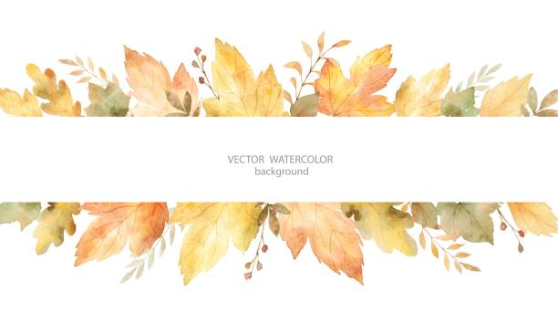watercolor autumn vector banner of leaves and branches isolated on white background. - fall stock illustrations