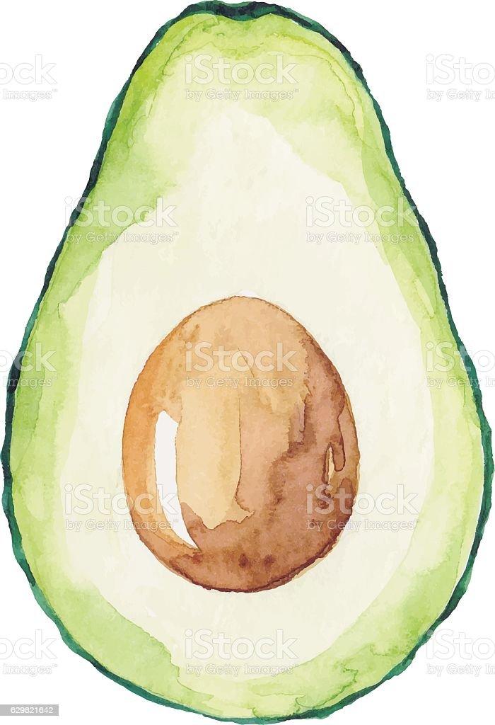 Watercolor Avocado - ilustración de arte vectorial
