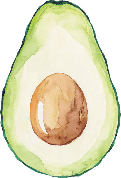 illustrazioni stock, clip art, cartoni animati e icone di tendenza di watercolor avocado - avocado