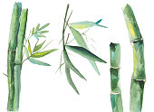 Vector illustration of watercolor bamboo isolated on white background