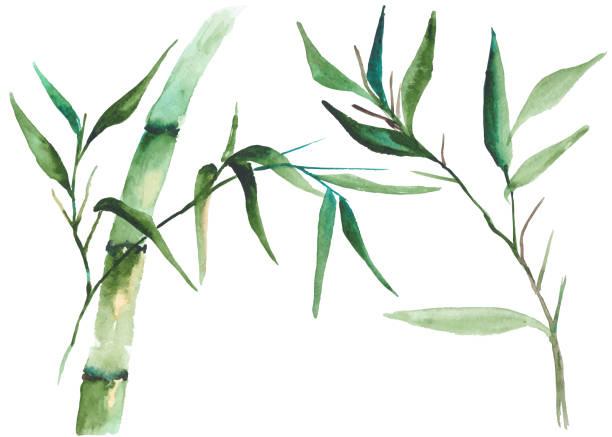 Watercolor bamboo illustration vector art illustration
