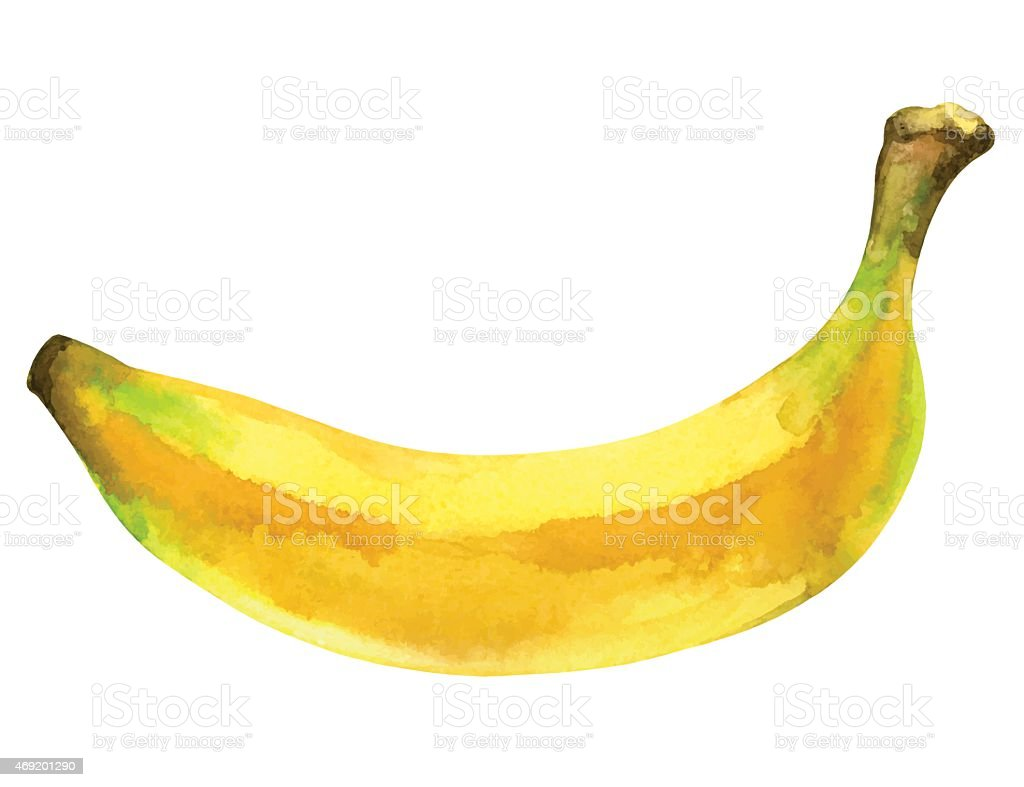 Watercolor banana fruit whole closeup isolated vector art illustration