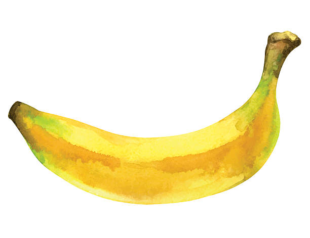 Watercolor banana fruit whole closeup isolated Watercolor banana fruit whole in peel closeup isolated on white background. Hand painting on paper - vector illustration banana stock illustrations