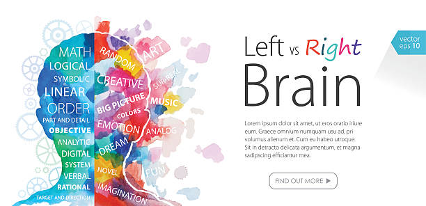 Watercolor Banner Left Vs Right Brain vector art illustration