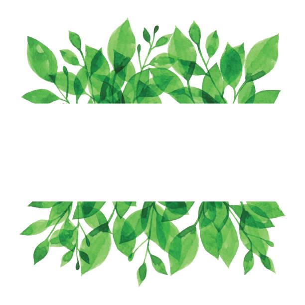 緑の枝と水彩バナー - ボタニカル点のイラスト素材/クリップアート素材/マンガ素材/アイコン素材