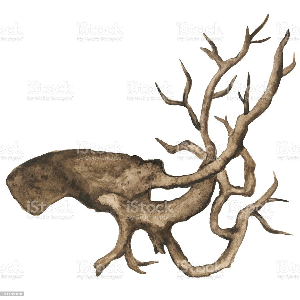 Watercolor bare tree, snag, bough, driftwood, branch vector art illustration