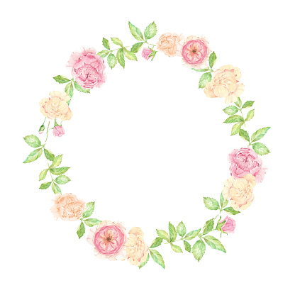 watercolor beautiful English rose flower bouquet wreath frame isolated on white background