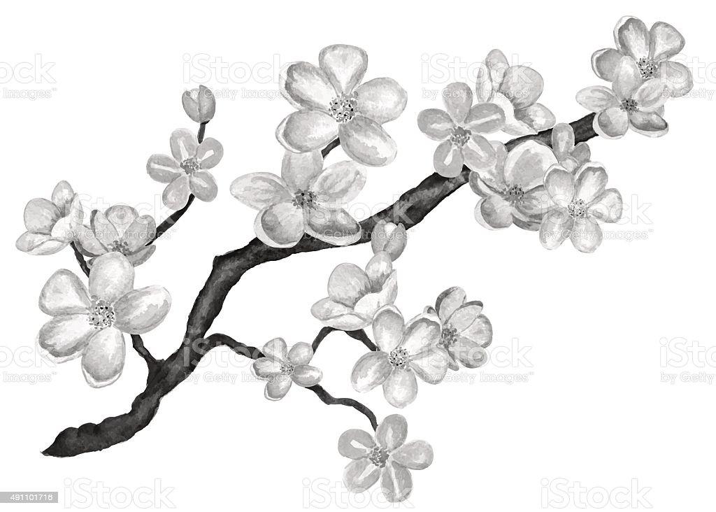 Watercolor Blossom Sakura Con Flores De Cerezo Illustracion Libre de ...