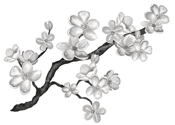 Watercolor blossom sakura, cherry tree with flowers Watercolor spring blossom sakura, japan cherry tree with flowers closeup isolated in black and white. Hand painting on paper apple blossom stock illustrations