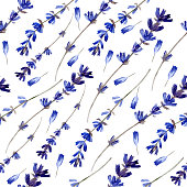 Watercolor blue lavender wild flowers isolated on white, seamless pattern, decorative background, botanical hand drawn painting texture for design package cosmetic, greeting card, wedding invitation