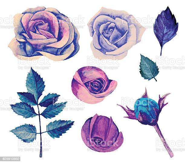 Watercolor blue roses vector isolated vector id625910932?b=1&k=6&m=625910932&s=612x612&h= rmmbtbpbr5nkorz0mvsthfhw6rsf2a4hw gdocgpdw=