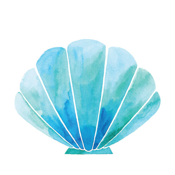 stockillustraties, clipart, cartoons en iconen met aquarel blauwe shell - zeeschelp