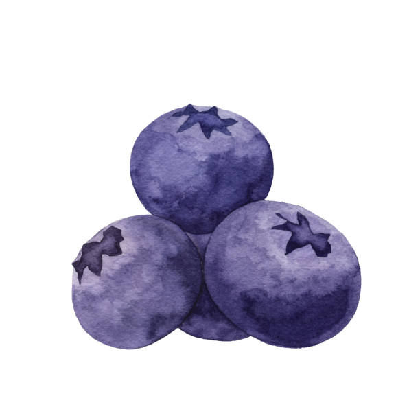 Watercolor Blueberries Vector illustration of Blueberry. berry fruit stock illustrations