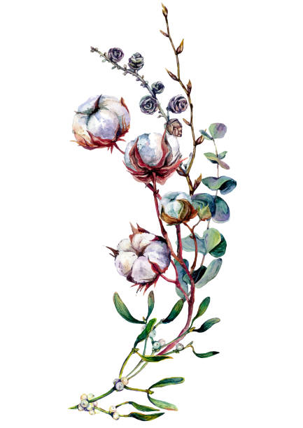 Watercolor Botanical Decoration with Cotton vector art illustration